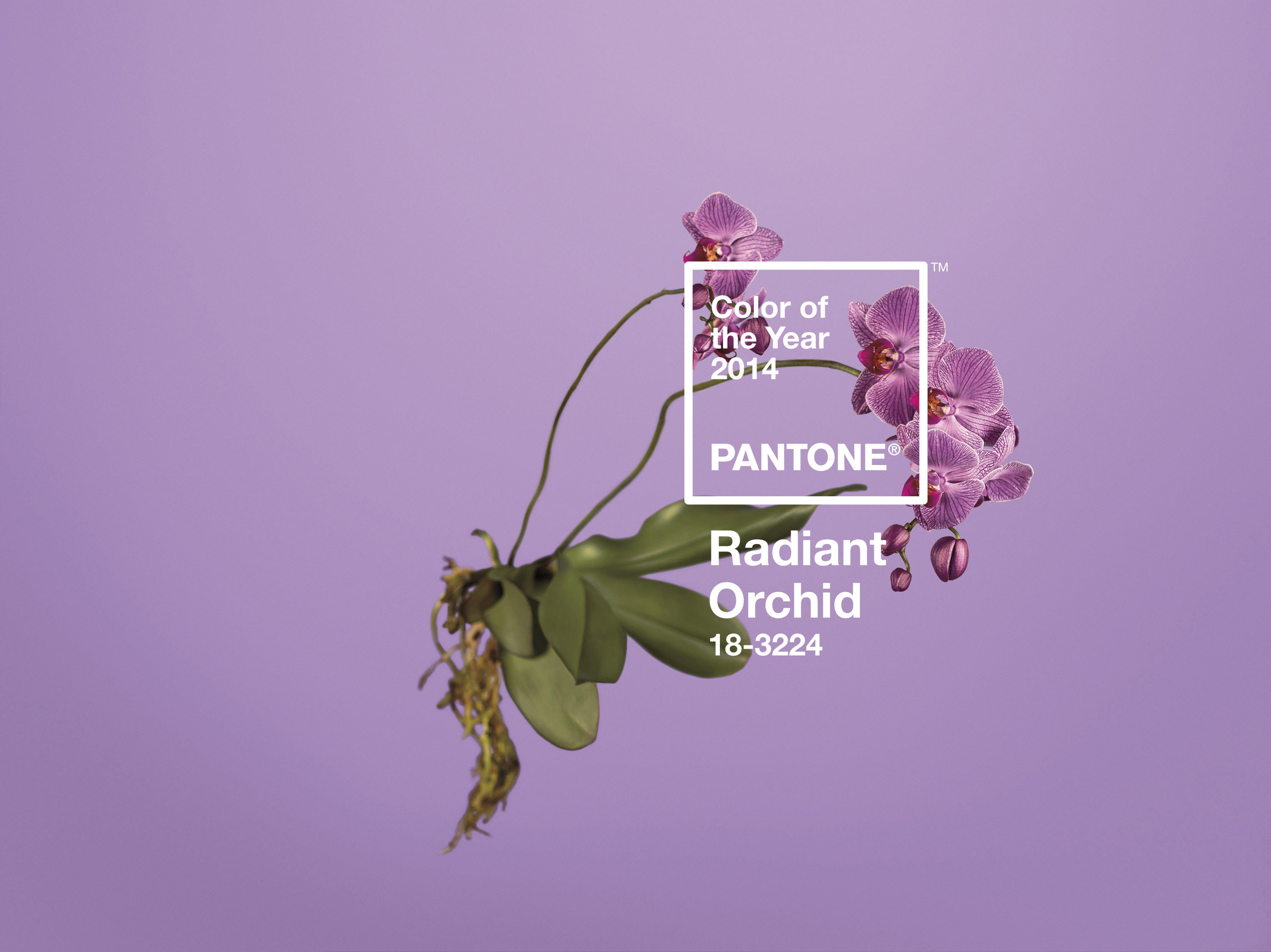 Radiant Orchid, Pantone's 2014 Color of the Year.